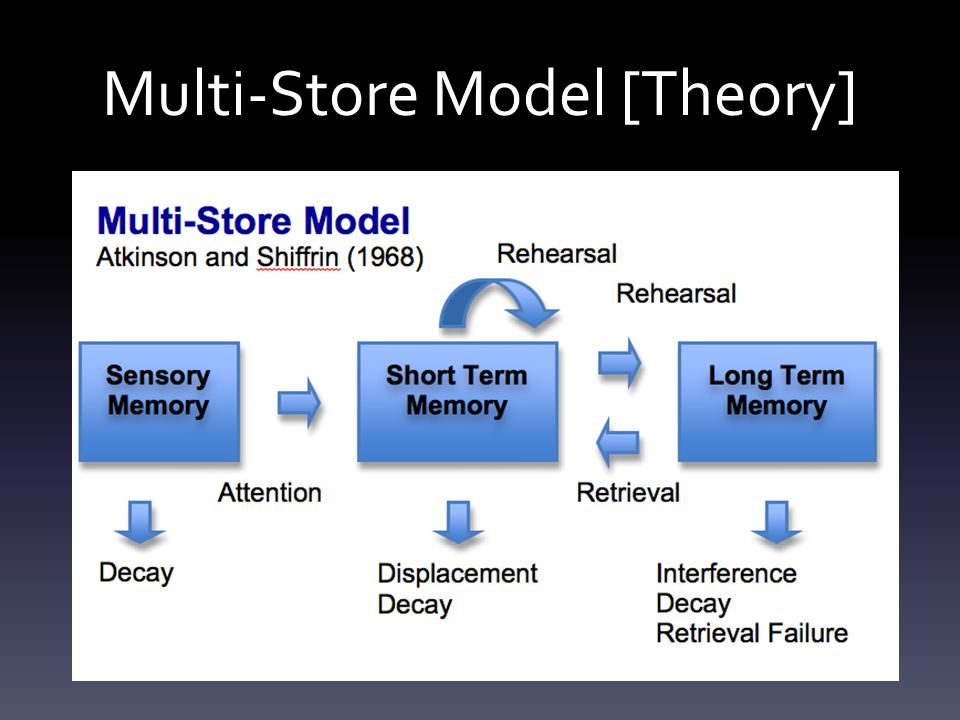 Multi-Store Model [Theory]